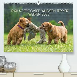 Kalender IRISH SOFT COATED WHEATEN TERRIER WELPEN 2022 (Premium, hochwertiger DIN A2 Wandkalender 2022, Kunstdruck in Hochglanz) von Annett Mirsberger