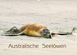 Kalender (Kal) Australische Seelöwen (Wandkalender 2022 DIN A2 quer) von Silvia Drafz