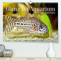 Kalender Glanz im Aquarium: Süßwasserfische (Premium, hochwertiger DIN A2 Wandkalender 2022, Kunstdruck in Hochglanz) von CALVENDO