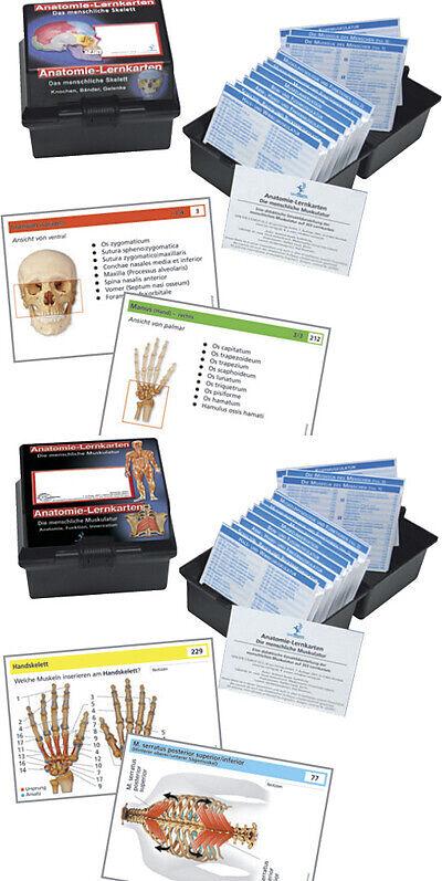 Doppelpack Anatomie-Lernkarten Muskulatur und Skelett - - Buch ...