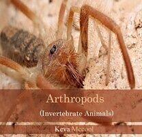E-Book (pdf) Arthropods (Invertebrate Animals) von Keva Mccool