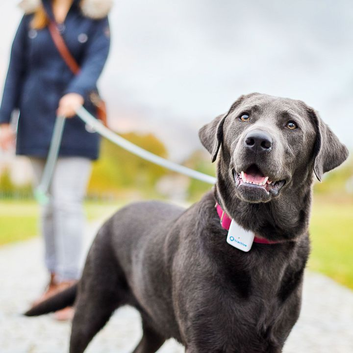 Tractive GPS Tracker Classic für Hunde - weiss